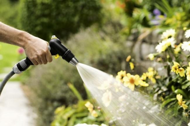 Полив растений шлангом