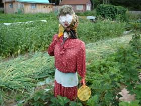 Misol scarecrows