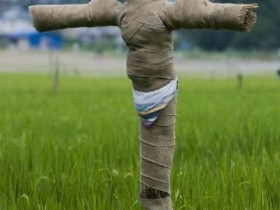 The idea of creating scarecrows