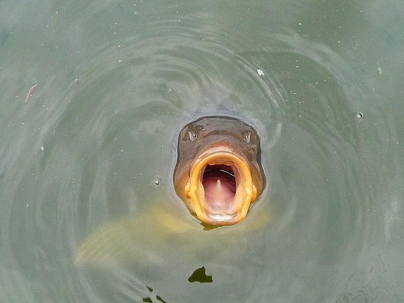 ловить живую рыбу в чистой воде