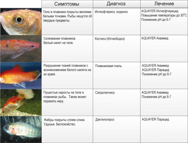 Популярные болезни рыбы и способы их лечения