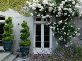 The rose garden at the entrance to the house