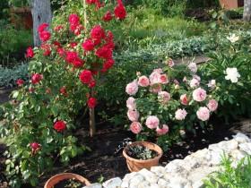 The rose garden at the garden decor