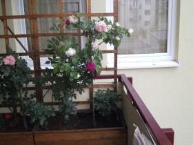 Decoration of balcony roses