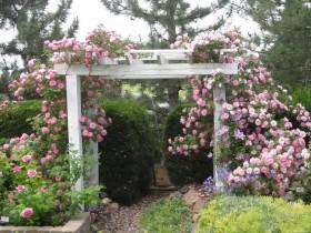 White garden arch for roses