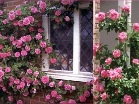 Window, decorated with roses