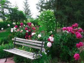 The rose garden near the benches