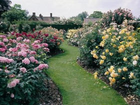 Beautiful rose garden along the garden