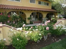Porch garden in roses