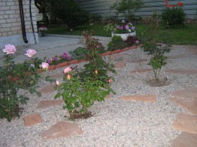 Little roses in the front garden