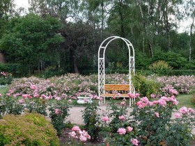 Beautiful rose garden in the garden