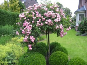 Beautiful rose garden on a country site