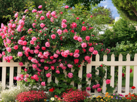 Wooden fencing in roses