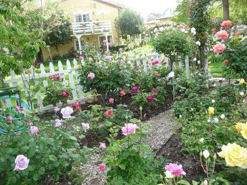 Розарий своими руками в саду