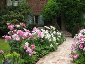 Beautiful rose garden on the porch garden