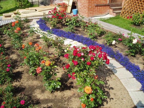 Ландшафтный дизайн дачного участка с розами фото