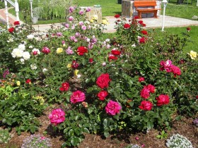 Garden flower bed with roses