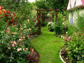 The rose garden in the walking area of the garden