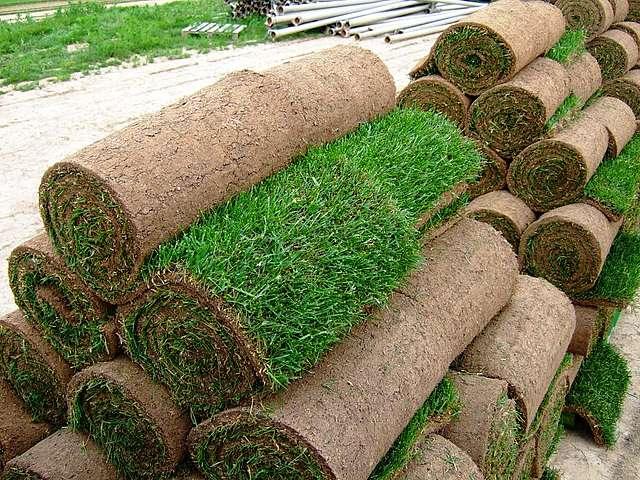 Качественный газон в рулонах
