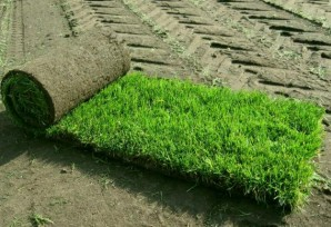 A few simple rules about, how to choose the right turf for garden