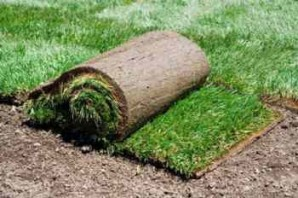 Turf: device, care, the technology of growing and styling