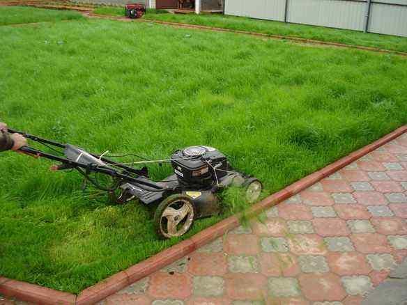 Стрижка рулонного газона