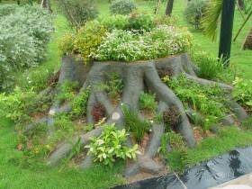 Друге життя старим корені дерева