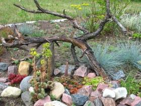 Корчі в оформленні саду
