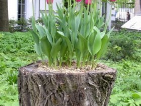 Stump as for the flower pot