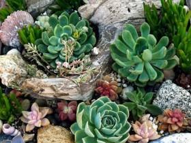 Коріння в оформленні саду