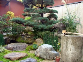 Plants in the Japanese garden