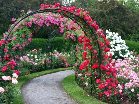 Arch in the garden, covered with climbing plants