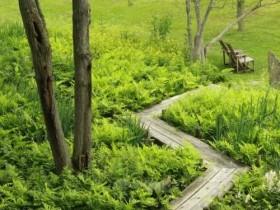Садовая дорожа из досок