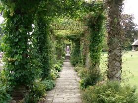 Аллея из пергол в саду