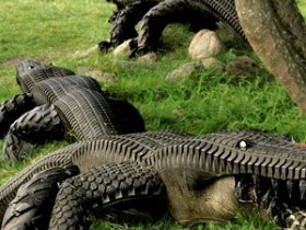 Crocodiles in the garden of tires
