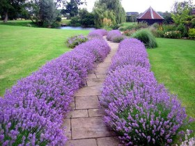 A border of flowers for garden paths