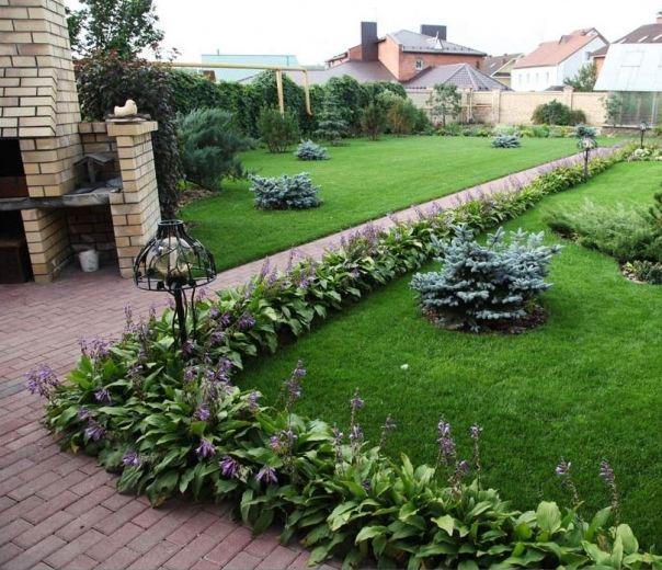 Дизайн газона из многолетников