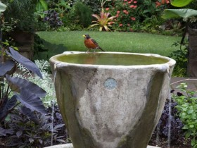 At the same time the garden fountain and the birdbath