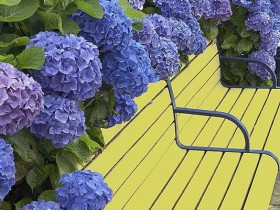 The combination of bright shades garden benches and flowers