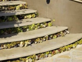 Concrete garden stair with flowers