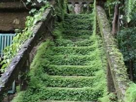 Озелененная садовая лестница
