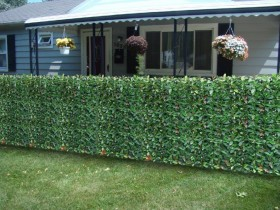 Hedge as fence