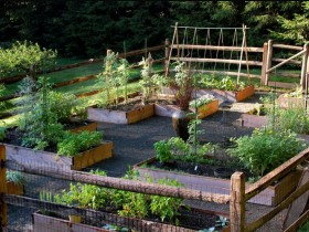 A vegetable garden in a rural garden