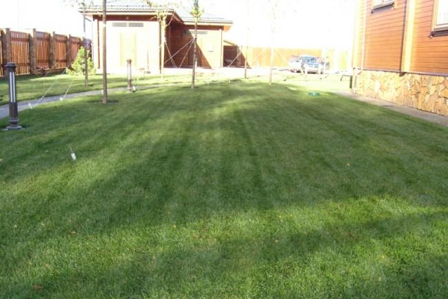 Теневыносливые семена для газона в тени