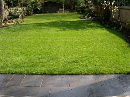 Элитная газонная смесь - внешний вид газона