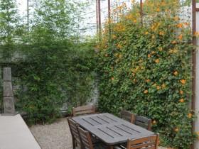 Шпалеры садовая, якое панура павойнымі раслінамі