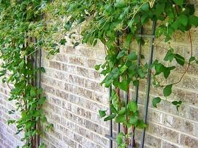 Кованая садовая шпалеры