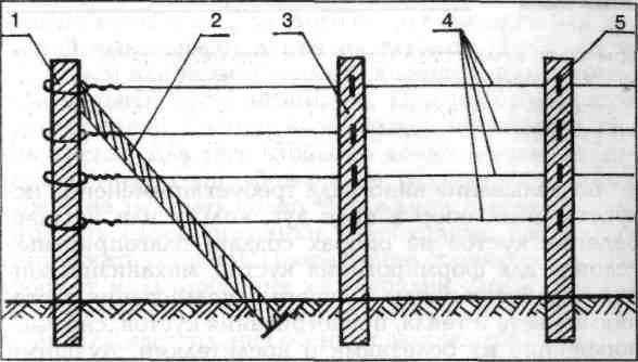 Схема простейшей шпалеры для