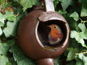 The birdhouse from the kettle