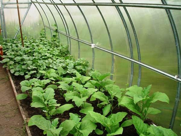 Теплица для растений своими руками